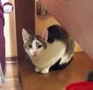 Vastra - nieśmiała koteczka szuka domu i przyjaciela! - 8