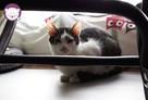 Vastra - nieśmiała koteczka szuka domu i przyjaciela! - 7