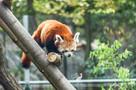 Sesja zdjęciowa zwierząt, zwierzęca fotografia, fotozwierzak - 5