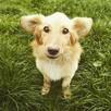 Psy z likwidowanego schroniska błagają o domy!