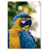 Sprzedam papuga ara