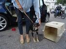 Starszy psiak pilnie szuka domu tymczasowgo lub stałego - 4