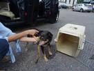 Starszy psiak pilnie szuka domu tymczasowgo lub stałego - 3