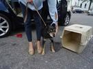 Starszy psiak pilnie szuka domu tymczasowgo lub stałego - 5