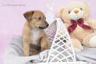 OTOZ Animals Dąbrówka - Kto pokocha Małą Mi ? - 2