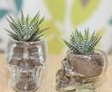 Czaszka szklana skull czacha szklanka - 1