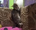 Kociaki szukają domów - 4