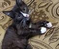 Kociaki szukają domów - 10