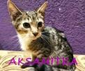 Kociaki szukają domów - 2