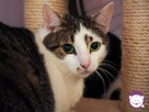 Vastra - nieśmiała koteczka szuka domu i przyjaciela! - 13
