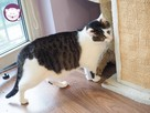 Vastra - nieśmiała koteczka szuka domu i przyjaciela! - 14