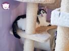 Vastra - nieśmiała koteczka szuka domu i przyjaciela! - 16