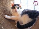 Vastra - nieśmiała koteczka szuka domu i przyjaciela! - 15