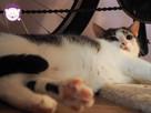 Vastra - nieśmiała koteczka szuka domu i przyjaciela! - 12