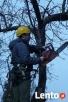 wycinka,przycinka drzew w trudno dostępnych miejscach Wieliczka