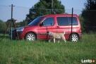 Hotel dla psa PSANATORIUM Pomożemy w przywiezieniu. - 5