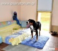 Hotel dla psa PSANATORIUM Pomożemy w przywiezieniu. - 1