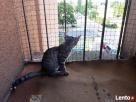 Kocia siatka na balkon, dla kota lub na gołębie. Już od  Warszawa