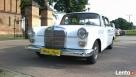 Białą Perłą do ślubu-zabytkowy mercedes z 1963 roku - 1