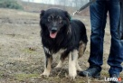 psy ze schroniska szukają domu - 2