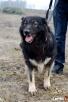 psy ze schroniska szukają domu - 4
