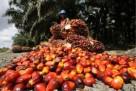 Olej rafinowany i olej palmowy i olej słonecznikowy. - 1
