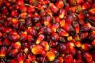 Olej rafinowany i olej palmowy i olej słonecznikowy. - 2