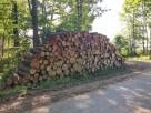 Las, drzewa - wycinka i rekultywacja
