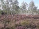 Rynia gmina Dobre sprzedam działkę leśną - 1
