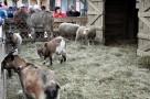 Pokaz żywych zwierzęta zoo szkół, przeszkoli i grup biwak