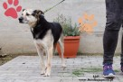 Lidl - spokojny psiak - 4