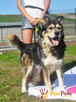BESKID-Przepiękny, dostojny, wesoły i energiczny pies,adopcj - 5