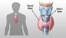 Thyroid Kompleks Tarczyca USA PipingRock 100 tabletek