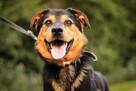 Rubel - wesoły, cudowny pies :)
