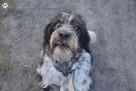 OTOZ Animals Dąbrówka - Buster szuka nowego domu.