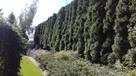 Trawa z rolki + kompleksowe zakładanie ogrodów Nawodnienie - 2