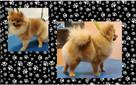 Fryzjer dla psów Huta Stara B - Salon Pieskie Sprawy - 4