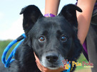TYTANEK-wspaniały, super miły, duży czarny psiak-szukamy DOM - 10