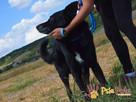 TYTANEK-wspaniały, super miły, duży czarny psiak-szukamy DOM - 8