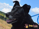 TYTANEK-wspaniały, super miły, duży czarny psiak-szukamy DOM - 15