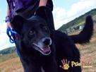 TYTANEK-wspaniały, super miły, duży czarny psiak-szukamy DOM - 5