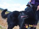 TYTANEK-wspaniały, super miły, duży czarny psiak-szukamy DOM - 7
