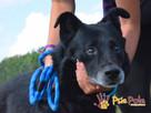 TYTANEK-wspaniały, super miły, duży czarny psiak-szukamy DOM - 9