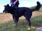 TYTANEK-wspaniały, super miły, duży czarny psiak-szukamy DOM - 3