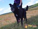TYTANEK-wspaniały, super miły, duży czarny psiak-szukamy DOM - 4