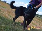 TYTANEK-wspaniały, super miły, duży czarny psiak-szukamy DOM - 6