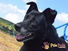 TYTANEK-wspaniały, super miły, duży czarny psiak-szukamy DOM - 14