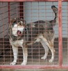 Lord piękny pies czeka na dobrego człowieka Zawiercie