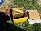 Ule, pszczoły, odklady pszczele - przygarnę. Zrewanżuję się.
