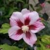 Sprzedam piękne roślinki do Twojego ogrodu - 1